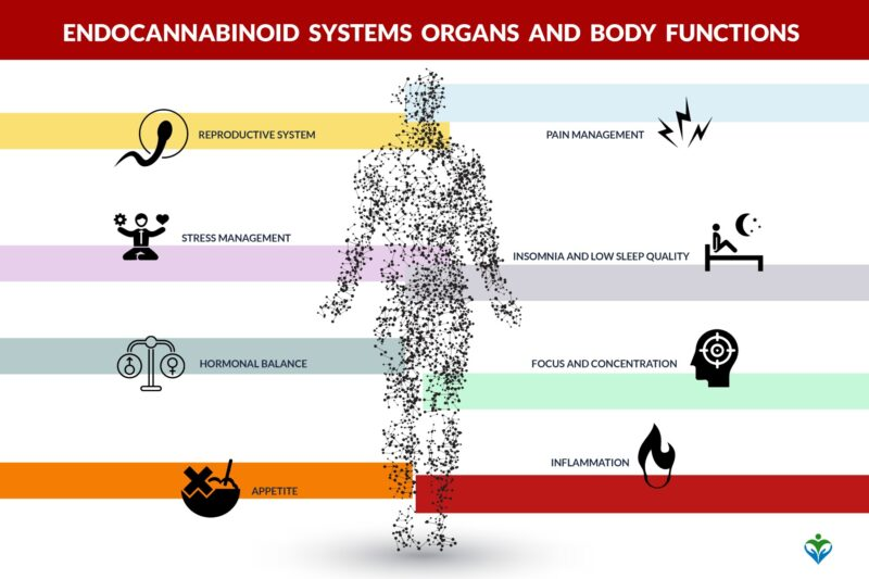 Endocannabinoid_systems_organs_and_body_functions