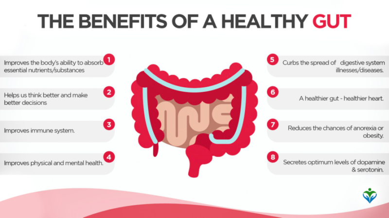 The_Benefits_of_a_Healthy_Gut